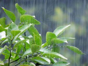 雨漏りは水漏れ修理業者に依頼できる?